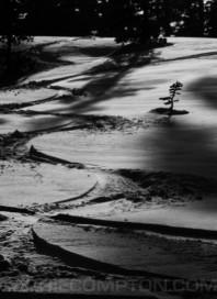 Tree Tracks BW