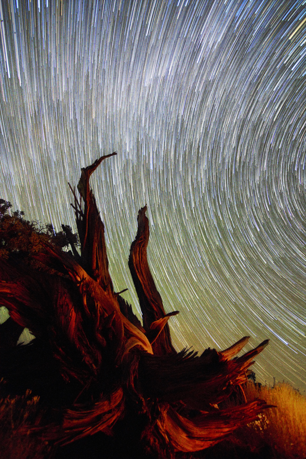 dead-tree-star-trails